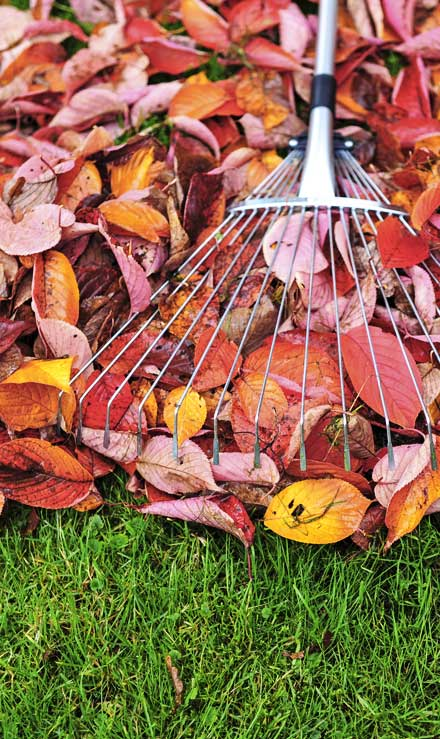 1st Choice Lawn Care & Landscaping Fall Clean Up